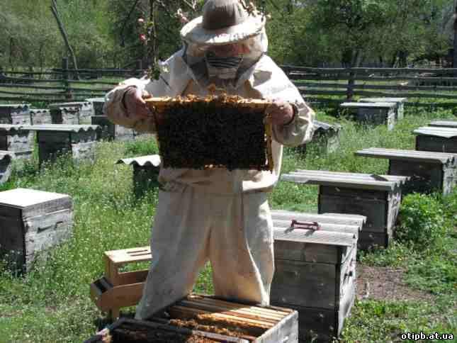 инструкция по охране труда для пчеловода - фото 2