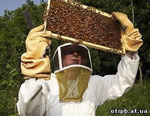 инструкция по охране труда для пчеловода - фото 5